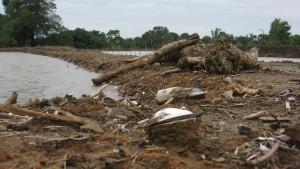 Muscheln und Mangroven vielen den Dammarbeiten bei den Fischteichen zum Opfer (Michael Reckordt, Juli 2015)