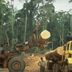 Foto: Regenwald Kongo von Rettet den Regenwald e.V. (Rainforest Rescue) mit CC BY-NC-ND 2.0 Lizenz (Flickr)